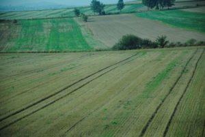 Аграрні розписки допомагатимуть розширенню сільгоспугідь на Рівненщині