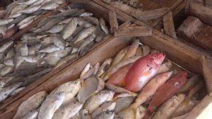 Рибний ринок