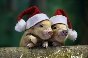 Новий рік. Свинки